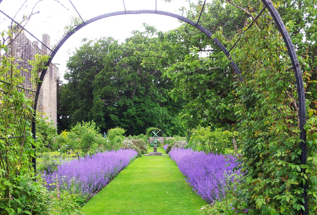 lavendel i trädgård